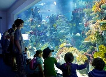 Bristol Aquarium in Bristol