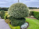 Povey Garden Maintenance